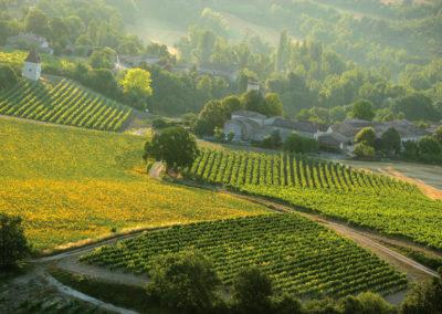 Paysage_de_vignesVineyard_landscape-CDT81-VIET_Dominique-Andillac-Vignoble----D.Viet-20050714.071137-1200px